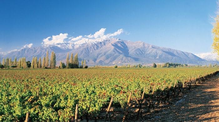 Barbera wine: California, the Central Valley