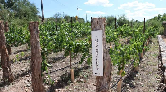 All About Grenache