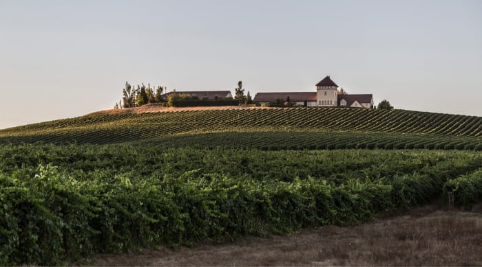 A Brief History of Pinot Gris