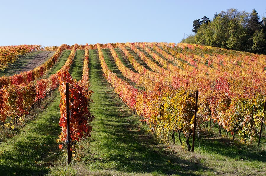 Le Marche WineriesLe Merche wineries