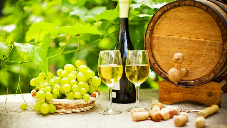 Gruner Veltliner Viticulture