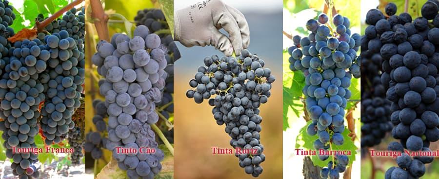 Grape Varieties Used