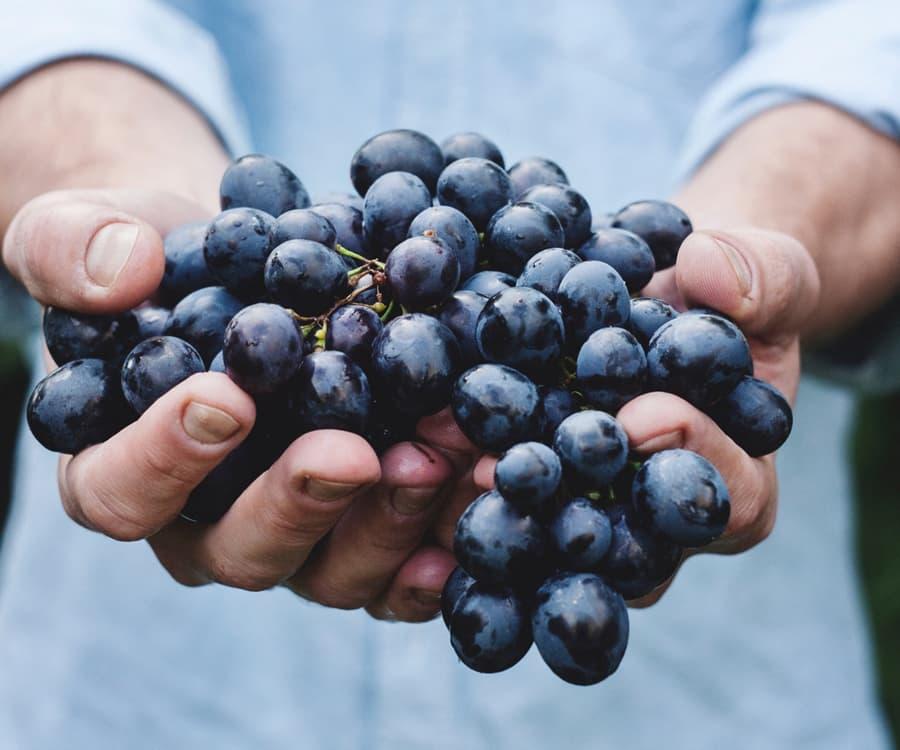 Nero d'Avola Grapes