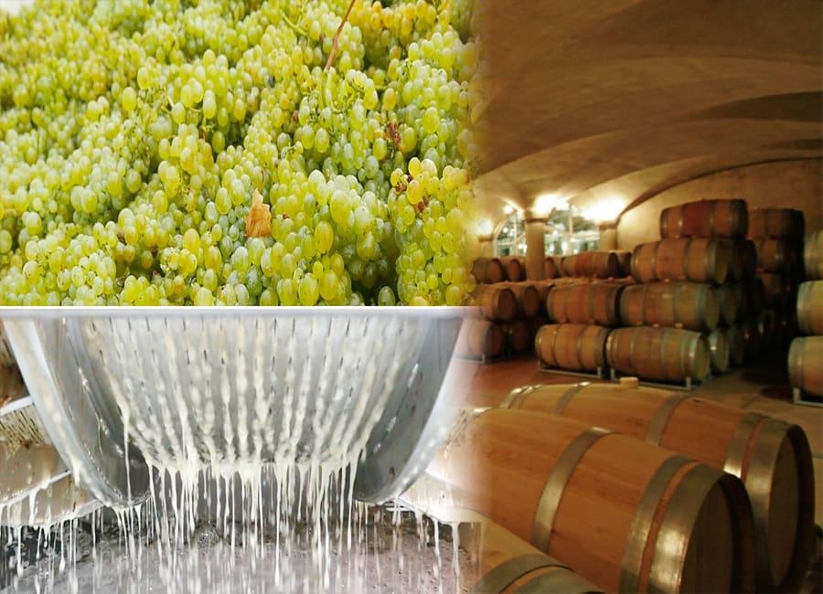 Sauvignon Blanc Winemaking Process