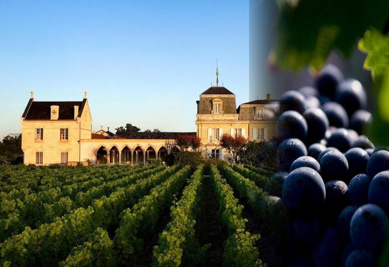 Château Haut Brion Terroir and Grapes