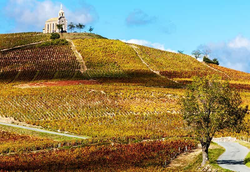 The Terroir of Beaujolais