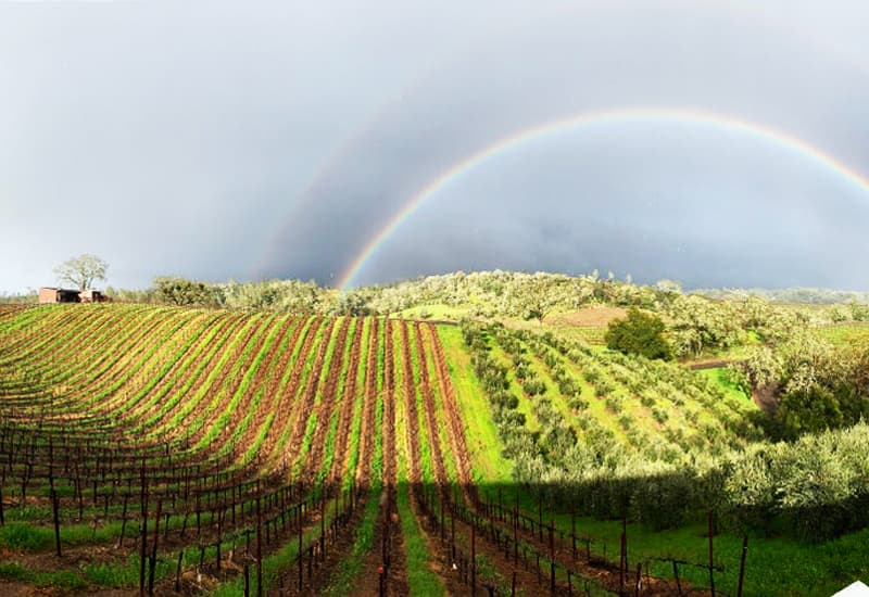 Dry Creek Valley of Sonoma County