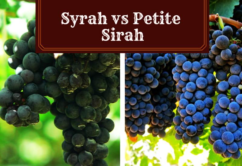 Syrah and Petite Sirah