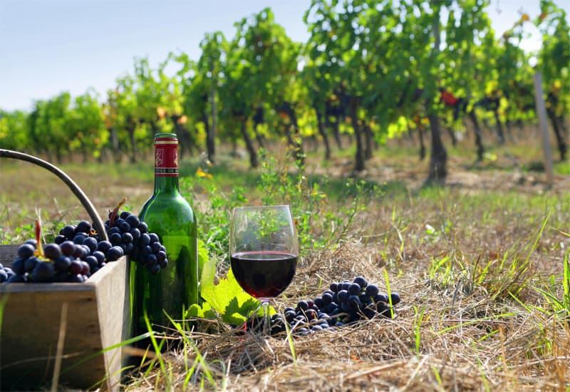 A Quick History of Burgundian Wine