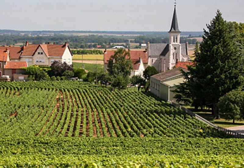 Cote de Beaune is popular for its Chardonnay