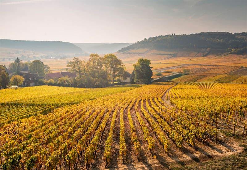 33 Grand Cru vineyards