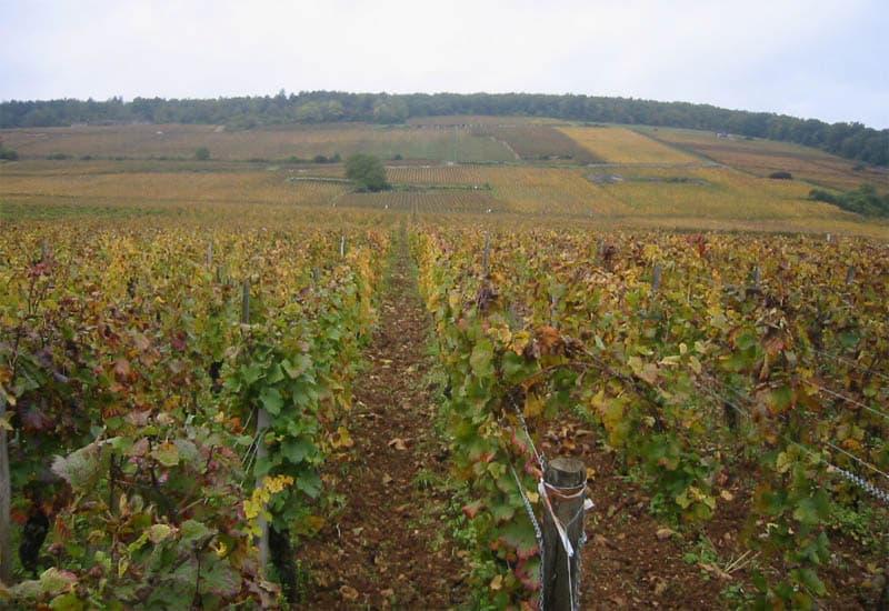 Premier Cru vineyard comes after the Grand Crus