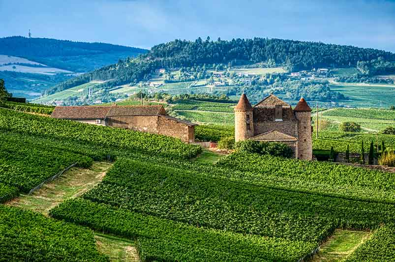 A Slice of Burgundian History For Your Collection