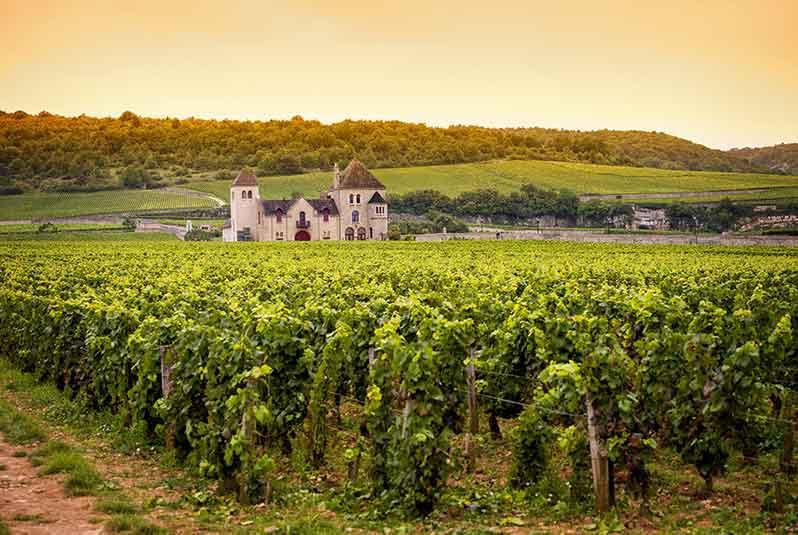 Investing in Burgundy Wine