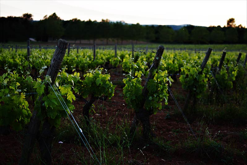 Pinot Noir Regions, France