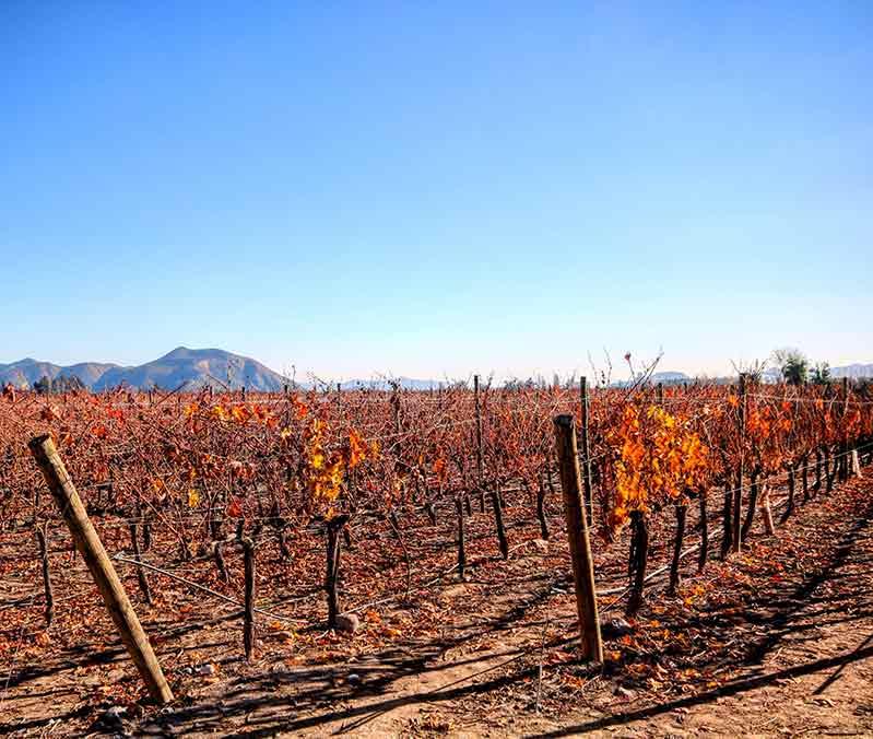 Pinot Noir Region, Chile
