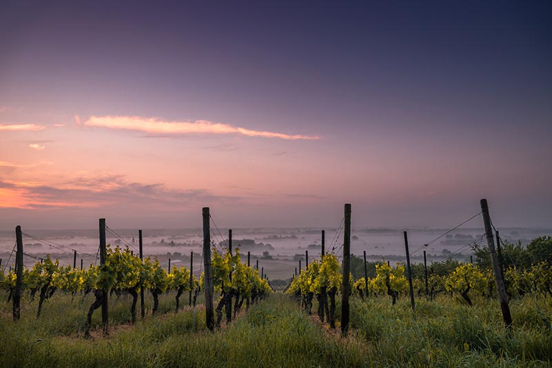 Pinot Noir Regions, Germany
