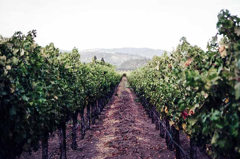 Pinot Noir Region, United States