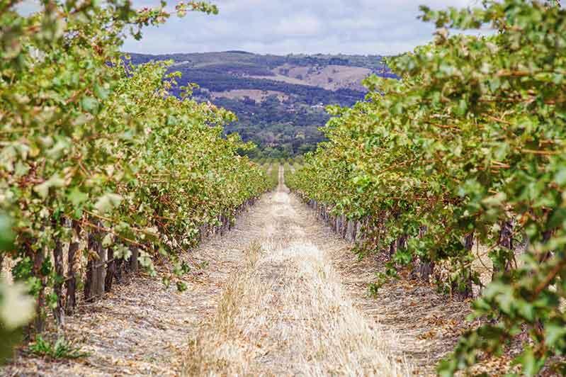 Pinot Noir Wine Reigon, Australia