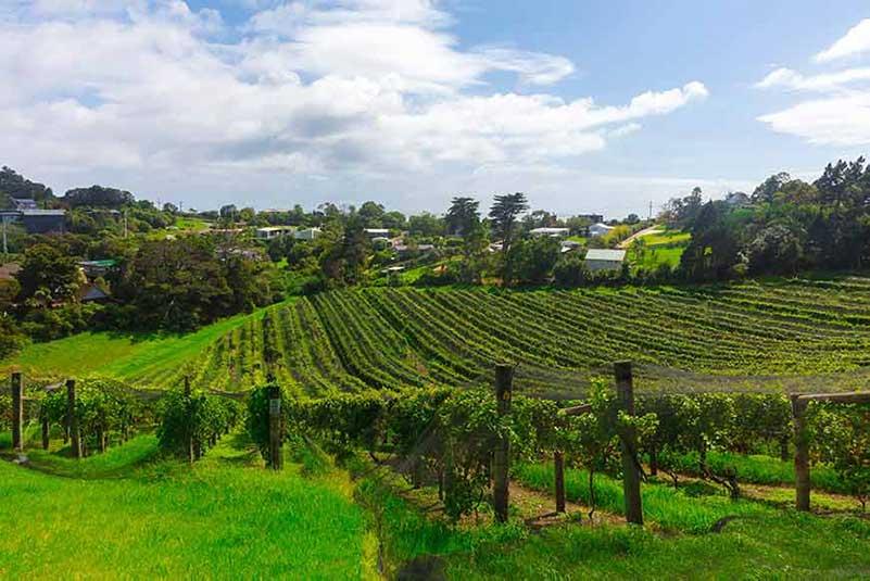 Pinot Noir Wine Reigon, New Zealand