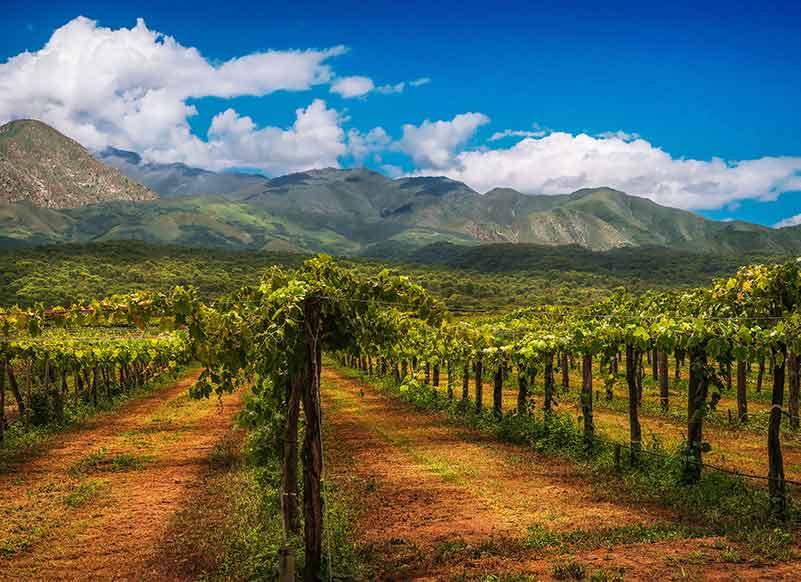 Pinot Noir Wine Reigon, Argentina