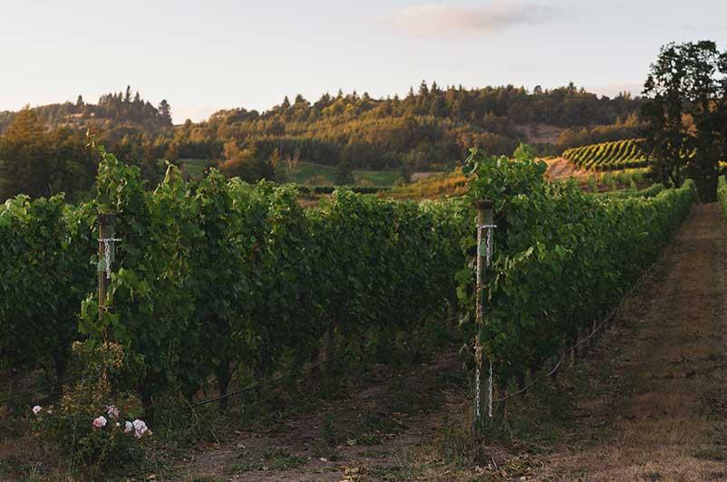 Pinot Grigio Wine Regions