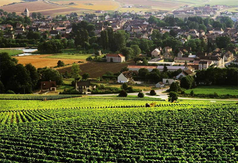 Chablis Hierarchy Of Appellations