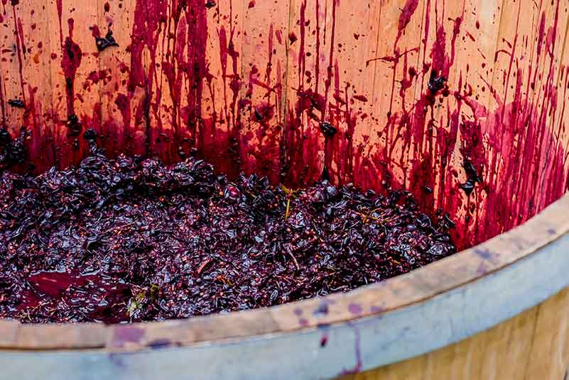 Winemaking Innovations at Giacomo Conterno