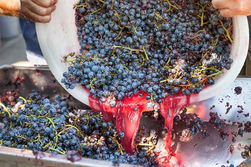 Winemaking At Colgin Cellars