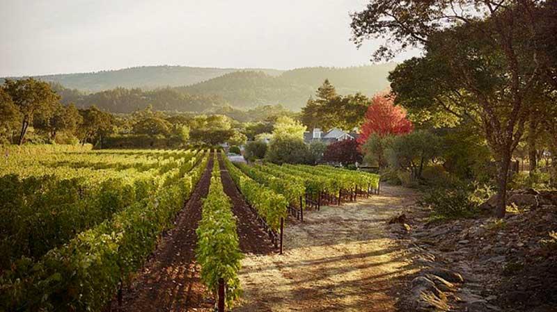 Tychson Hill Vineyards