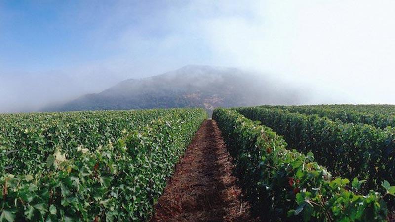 The IX Estate Vineyard