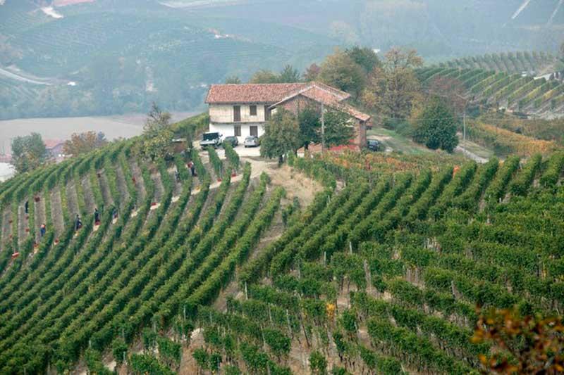 Monprivato vineyard