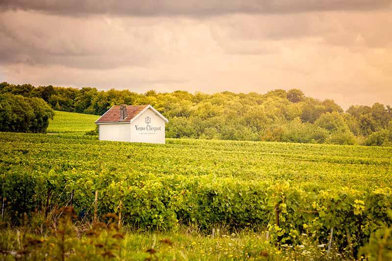 Veuve Clicquot Vineyards