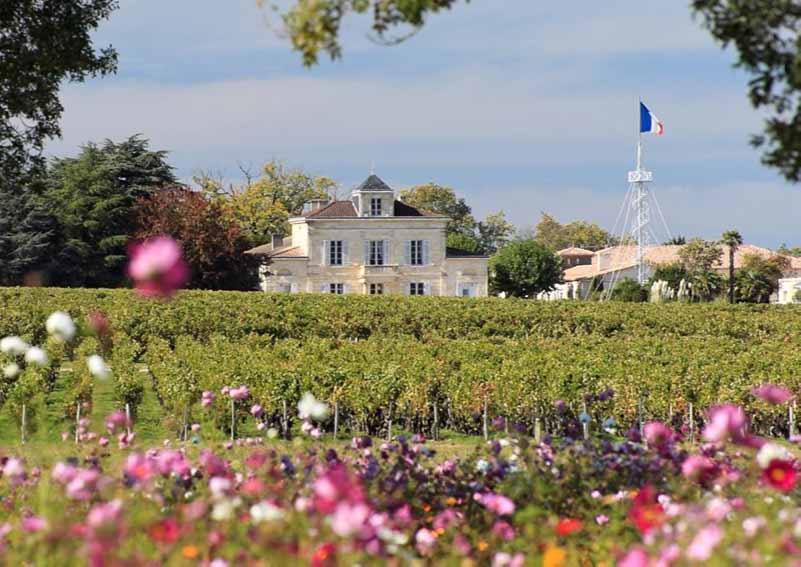 Vineyards Of Chateau Montrose
