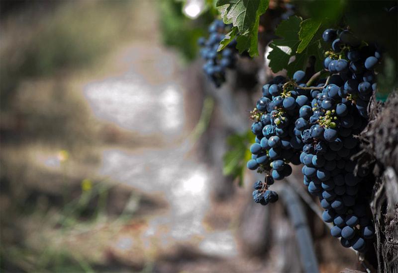 Grape Leap