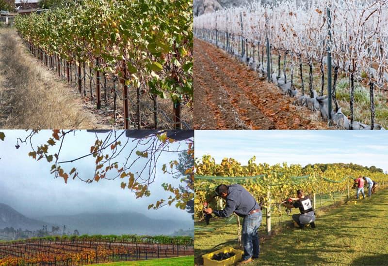 Wine Ecosystem