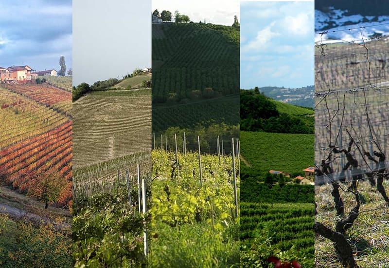 Roagna Vineyards