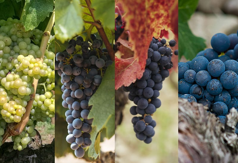 The Grapes of Rioja