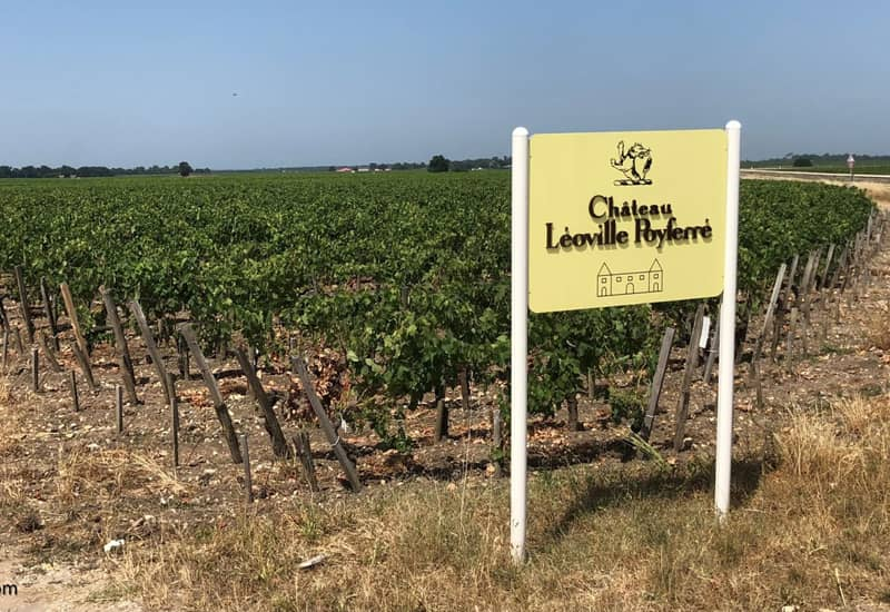 Leoville Poyferre Vineyards and Viticulture