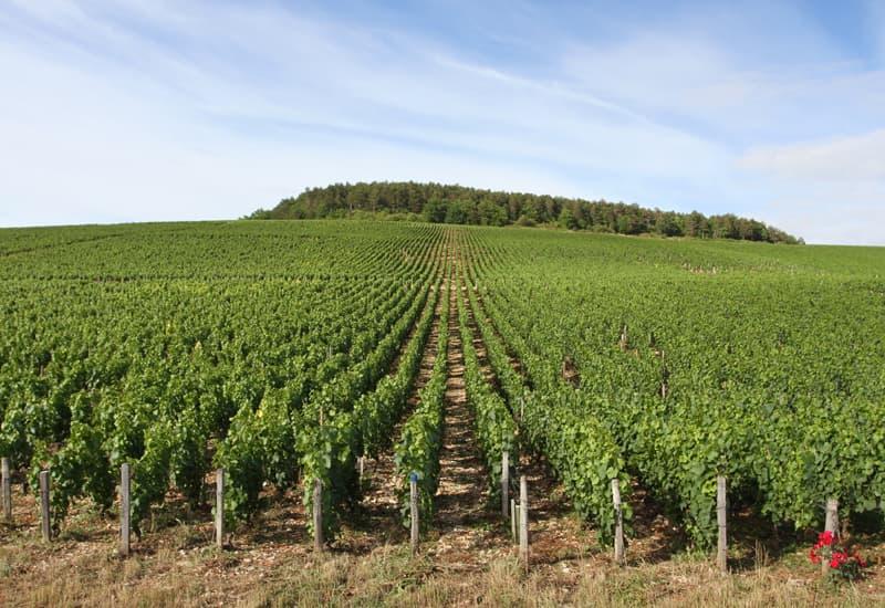 Vosne Romanee Grand Cru Vineyards