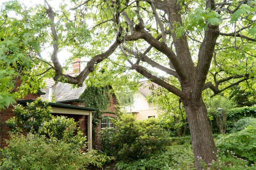 tree pruning residential services