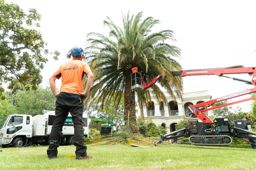 tree pruning commercial services