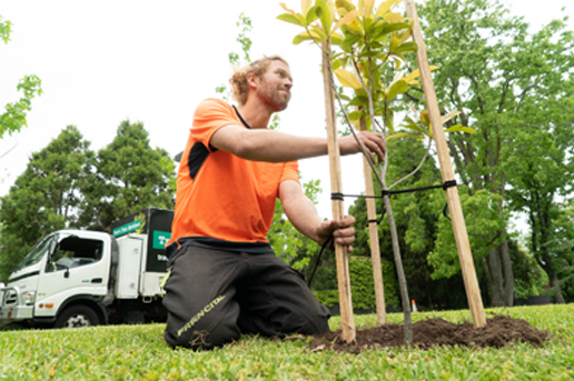 tree planting and maintenance