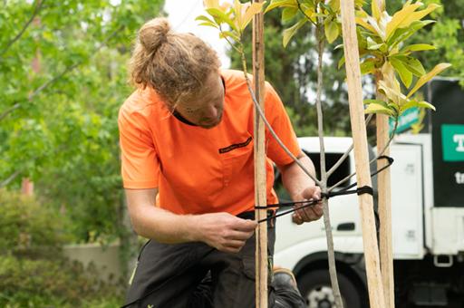 Tree planting residential