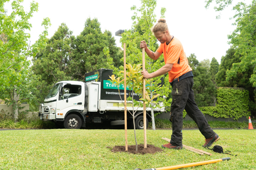Tree planting commercial services
