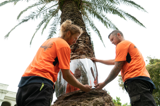 Arborist services for a safe and beautiful landscape