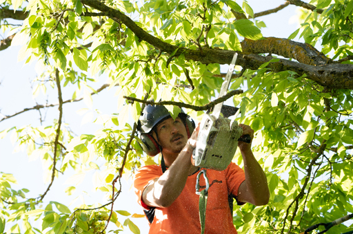 Tree services for insurance companies