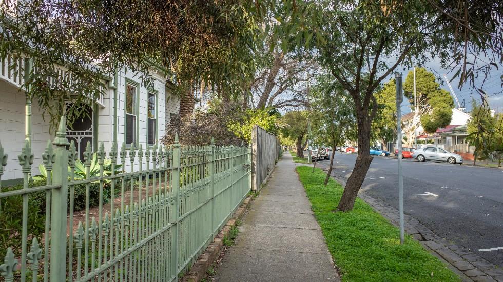 trees lining a suburban street