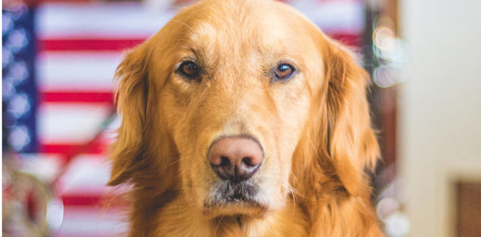 6 Summertime Safety Tips for Dog Owners