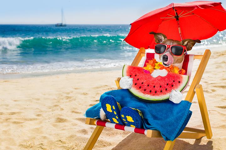 Scoop Soldiers Favorite Dog-Friendly Summertime Activities